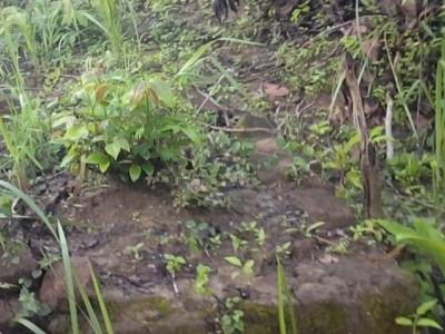 Jejak Prajurit Pangeran Diponegoro di Lasem