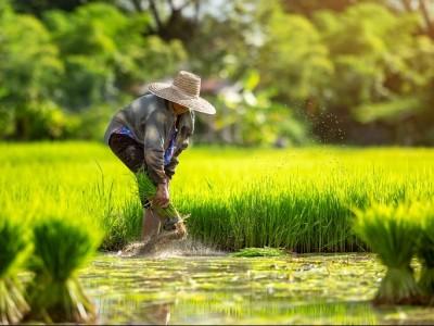 Menolak Kebijakan Impor Beras yang Rugikan Petani