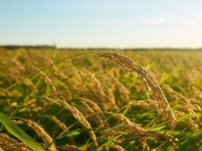 Penuh Masalah, Dewan Pakar Tani Minta Pemerintah Perbaiki Tata Kelola Pertanian