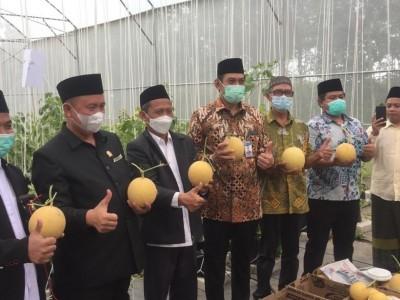 Panen Perdana Melon Inthanon di Green House Pesantren Minhadul Ulum Pesawaran