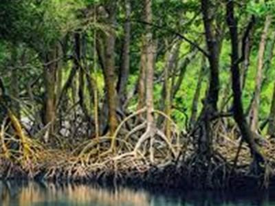 Ekosistem Gambut dan Mangrove Punya Nilai Ekonomis-Ekologis