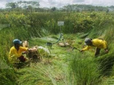 Libatkan Masyarakat, BRGM Bentuk Desa Mandiri Peduli Gambut dan Mangrove
