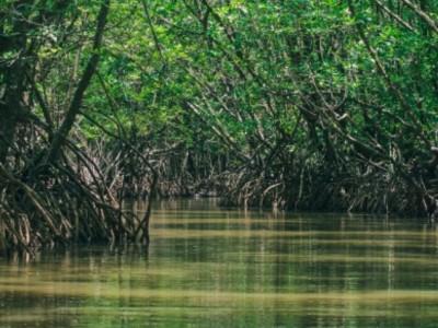 Manfaat Mangrove bagi Biota Laut