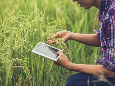Agro-Trading dan Nasib Petani dalam Kajian Fiqih Muamalah