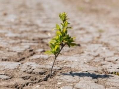 Gerakan Antaragama Perlu Diperluas untuk Kurangi Krisis Iklim