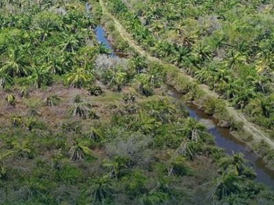 BRGM Perkuat Komitmen Percepatan Rehabilitasi Mangrove Berbasis Masyarakat