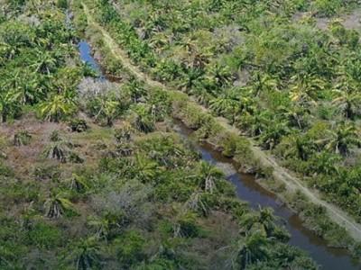 BRGM Pastikan Ekosistem Mangrove Bantu Sehatkan Lingkungan