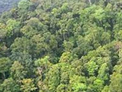 Kawasan Gambut di Papua Terjaga, BRGM Fokus Tingkatkan Kesejahteraan Masyarakat