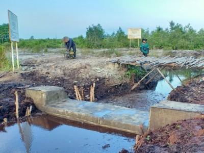 Kemarau Tiba, BRGM Perkuat Perlindungan Ekosistem Gambut di Sumatera