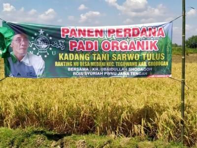 Panen Padi Organik di Grobogan, NU Jateng: Semoga Petani NU Semakin Sejahtera