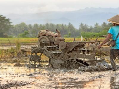 Akibat PPKM, Hasil Panen Petani Anjlok Hingga Rugi 80 Persen