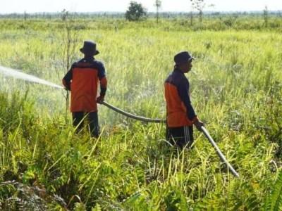 Langkah BRGM Antisipasi Kebakaran Gambut di Kalimantan